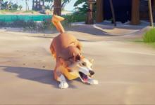 صورة الكلاب قادمة للعبة Sea of Thieves عن طريق تحديث جديد.